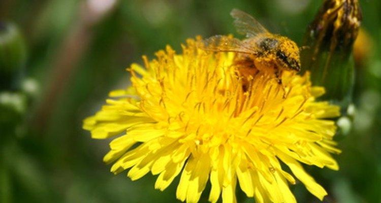 El promedio de miel que consume una persona es de 1,3 libras (589,6 g) anuales.