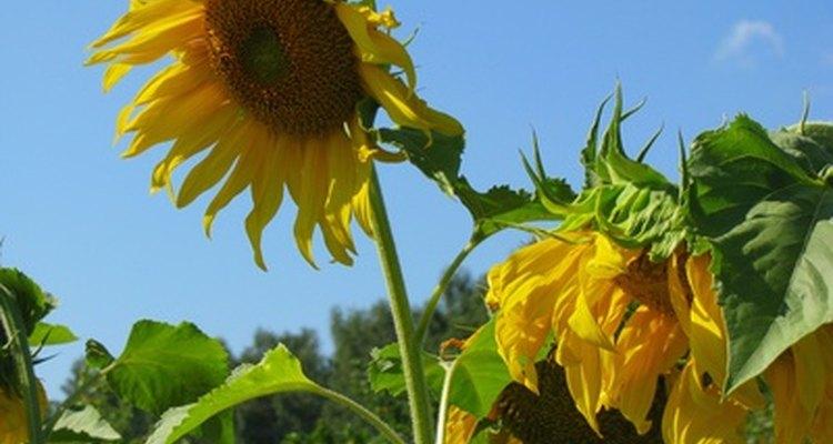Las plantas reaccionan ante los cambios en el medio ambiente.