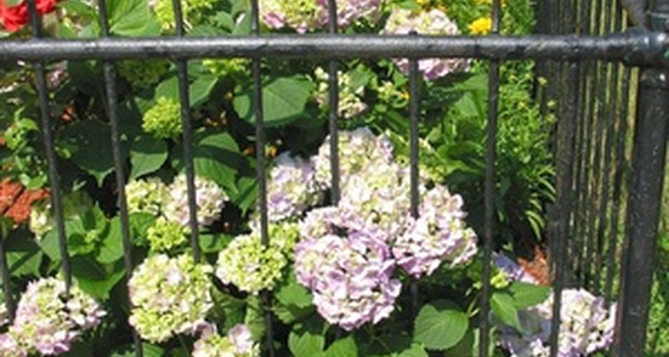 Iron fences add a decorative touch to your garden decor.
