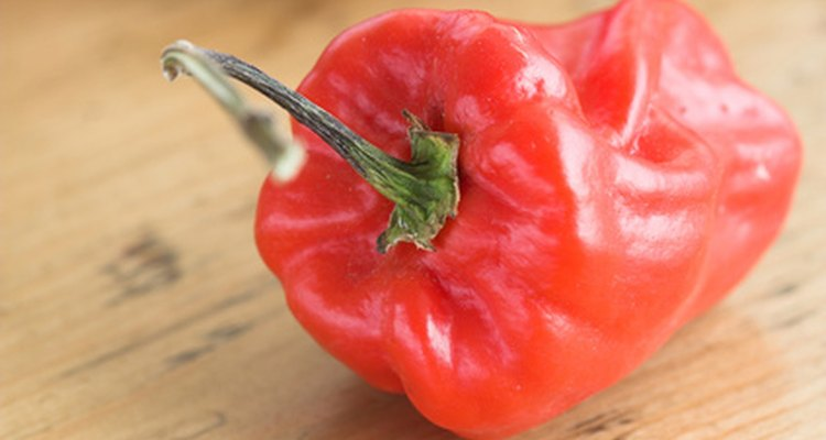 Cayenne peppers are native to South and Central America.
