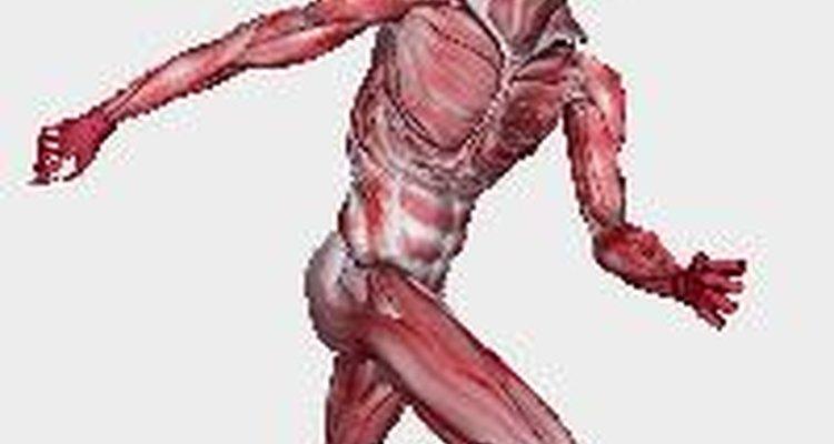 Os músculos do esfíncter são parte da anatomia humana
