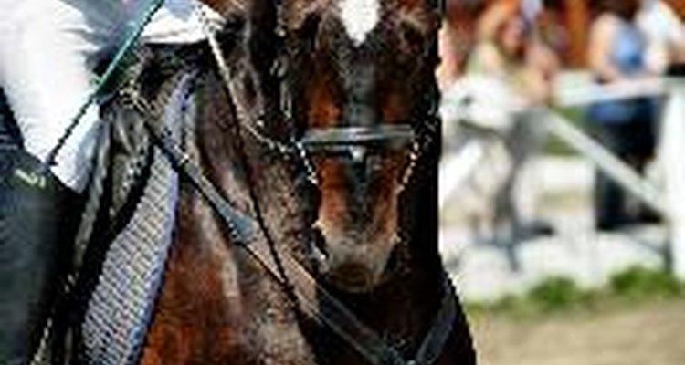Los defectos de conformación de la rodilla pueden ocasionar más desgaste en las rodillas de un caballo.