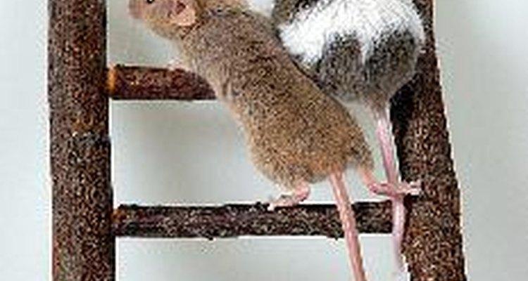 Si tienes ratones en tu casa, no te preocupes, hay remedios caseros para deshacerte de ellos.