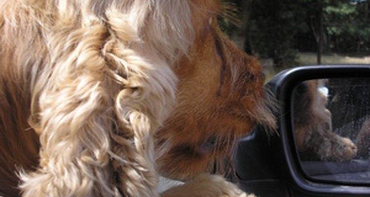 Puedes reducir el malestar de tu perro al viajar en auto.