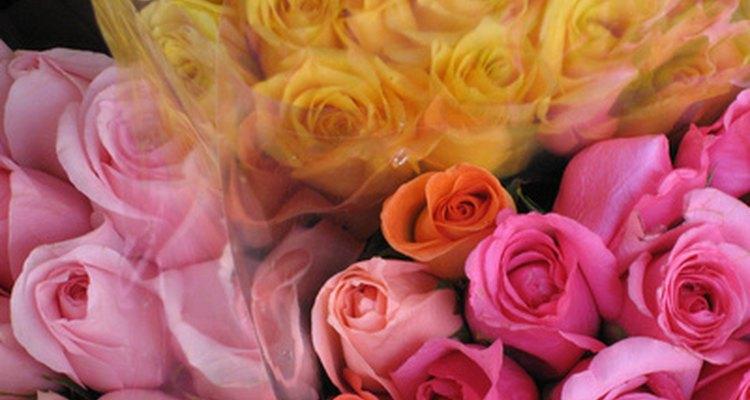 Você pode duplicar uma rosa através da clonagem