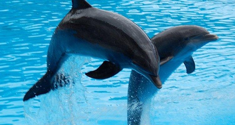 Los delfines son muy inteligentes.