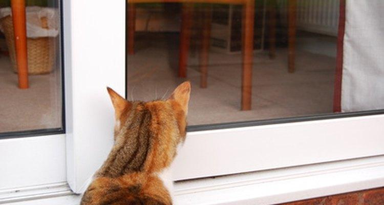 Gatos têm sentidos aguçados e são bons caçadores
