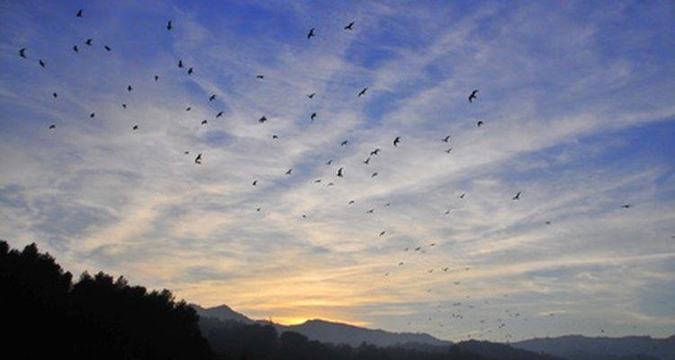 A medida que los días se hacen más cortos verás menos colibríes.