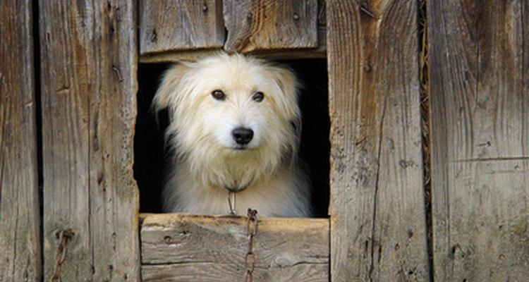 Los perros que han contraído brucelosis deben permanecer en cuarentena para evitar que se esparzan bacterias contagiosas a otros animales y humanos.