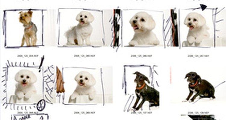 Nomes de arquivo ajudam a identificar fotos rapidamente.