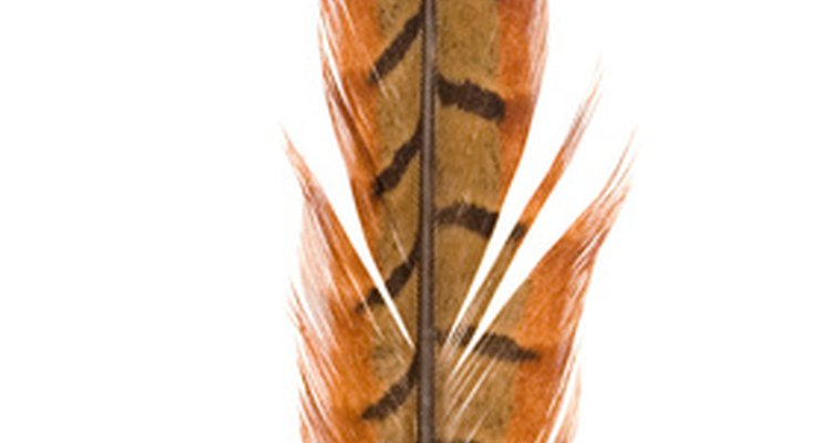 Pheasant feathers have a striking pattern.