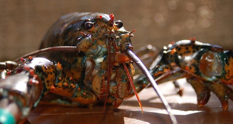 Catch a lobster for dinner