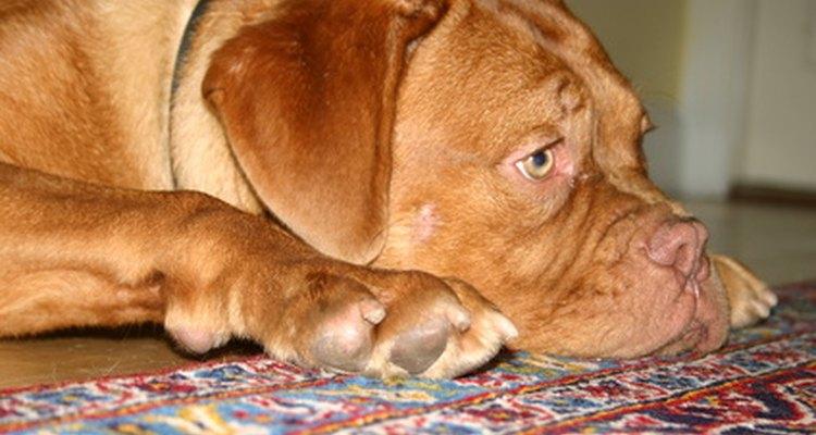 Your pet deserves great a good vet.