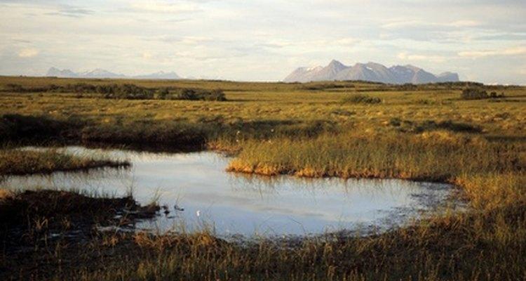 Hallada en los pantanos, la turba es el resultado de los materiales orgánicos degradados.