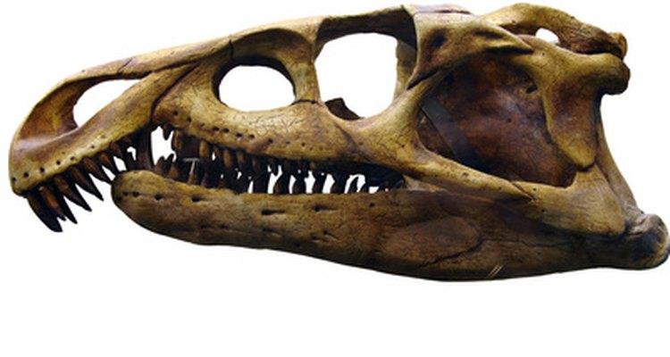 Alguns répteis diferem-se pelas aberturas no osso do crânio