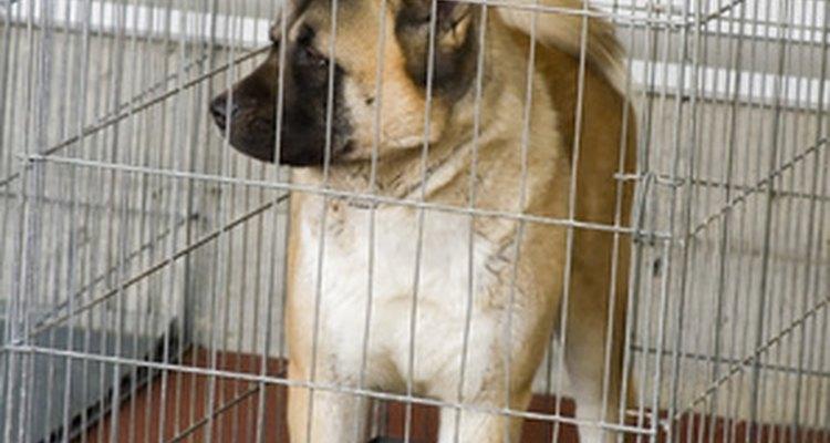 Las jaulas de alambre son generalmente mejores para el entrenamiento hogareño de un cachorro.