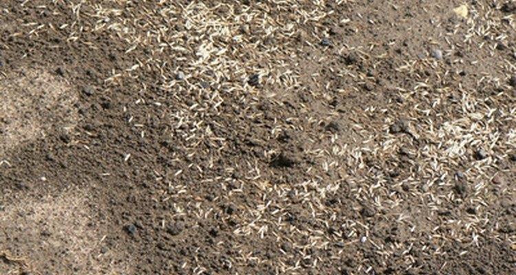 Es posible que desees plantar una mezcla de tipos de semillas de césped.
