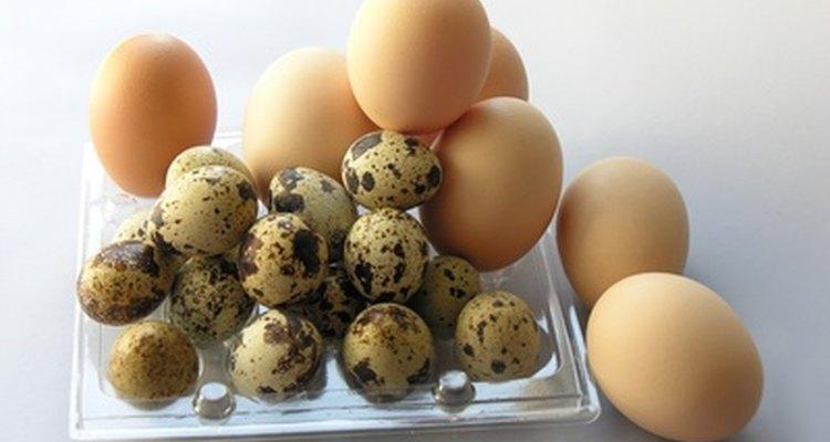 A casca de ovo é um substituto barato do cascalho