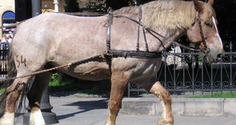 A brougham era puxada por um ou dois cavalos