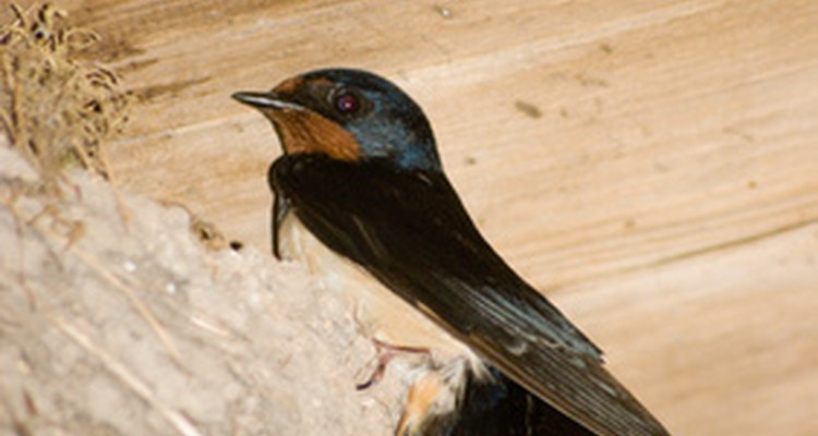 Birds nesting under or in the eaves of a house can cause problems.