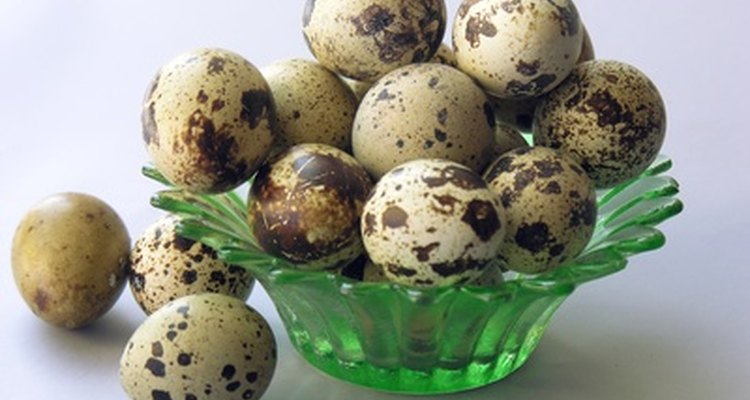 Los huevos de codorniz son manchados.