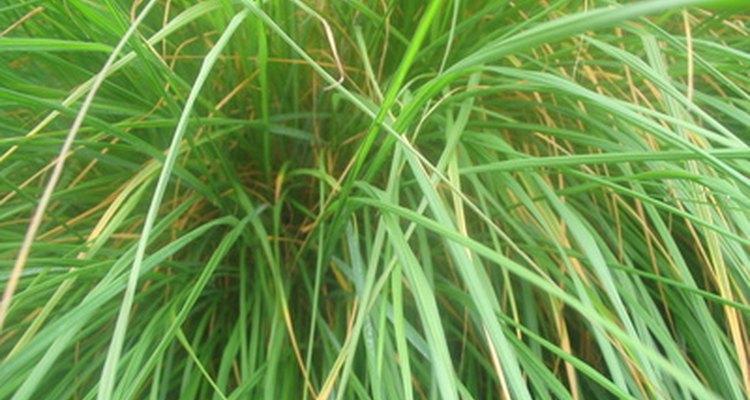 Las plantas eliminan sus desechos de diferentes formas.