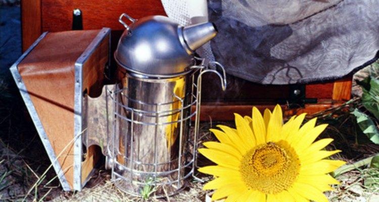 Defumadores de abelhas podem torná-las dóceis