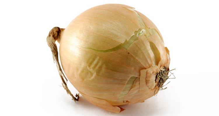 Cómo cultivar la cebolla embarazada (Ornithogalum longibracteatum).