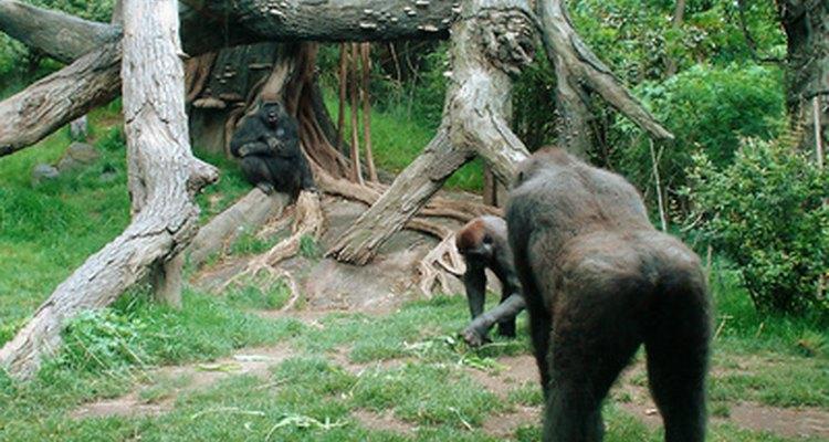 La conservación de los primates es una de muchas especialidades en el campo de la zoología.