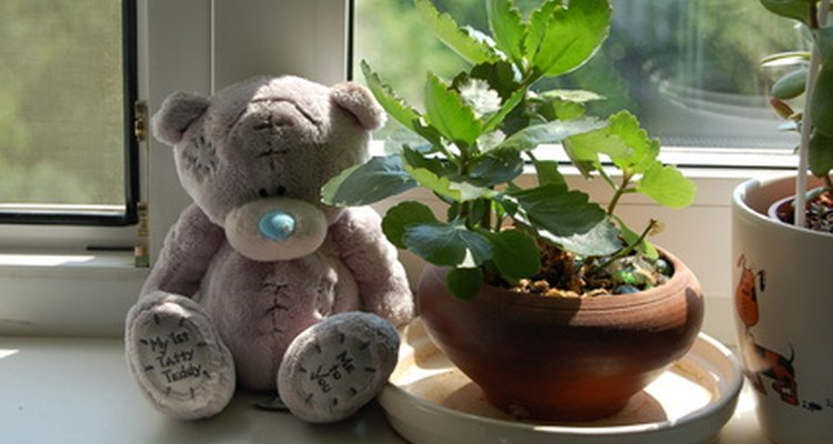 Wide window sills make good homes for plants.