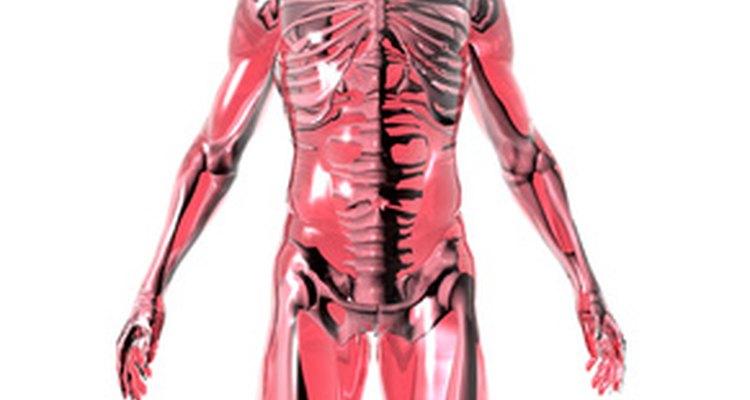 Projetos de anatomia e fisiologia podem ajudar os estudantes a reter informações