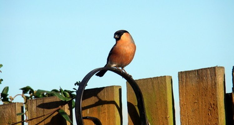 Inability or unwillingness to perch is a sick bird symptom.