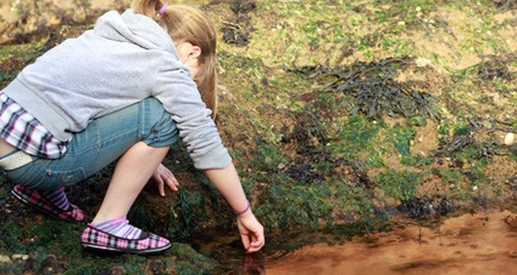 Rock pools are fascinating to look at.