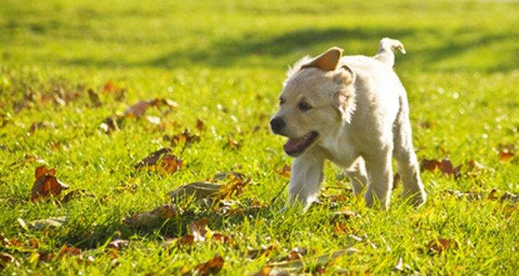 La exposición a nuevas situaciones es vital para el desarrollo del cachorro.