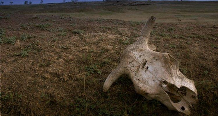 Construa um sistema de água confiável não deixar o gado morrer de sede