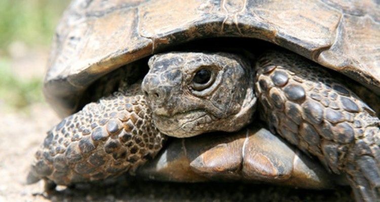 As tartarugas normalmente têm algum sentido cósmico