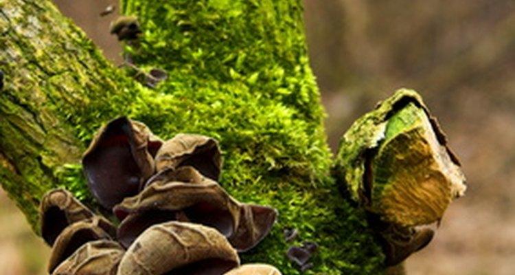 Un árbol con musgo y hongos.