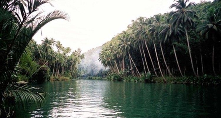 Los ríos tienen una gran cantidad de plantas acuáticas.