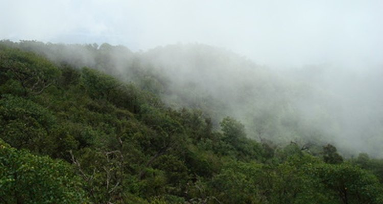 Cloud forests are distinguished by misty clouds lingering in forest's canopy.