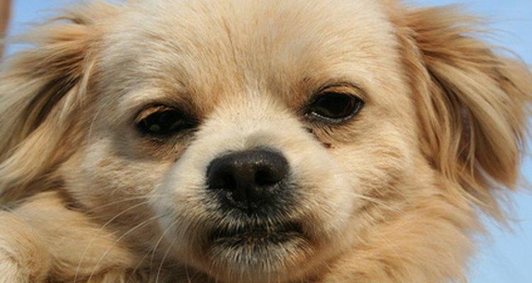 Algunos perros comen papel de baño.