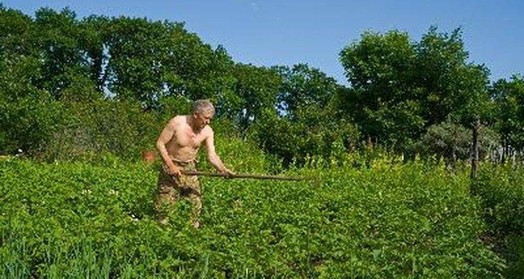 Se utiliza para romper el suelo alrededor de una mala hierba para que pueda ser eliminada fácilmente.