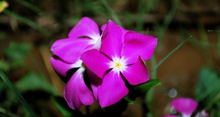 Do not use flowering vinca stems.