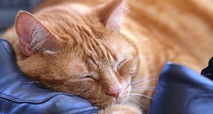 Medicamentos para la alergia a los gatos.