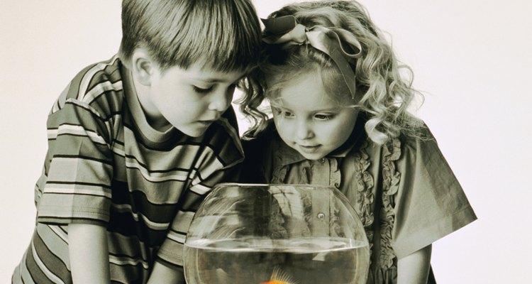 Las peceras son más fáciles de limpiar y de mantener que los grandes acuarios.