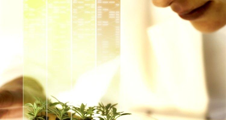 Las plantas de cultivo hidropónico utilizan menos agua y ocupan menos espacio.