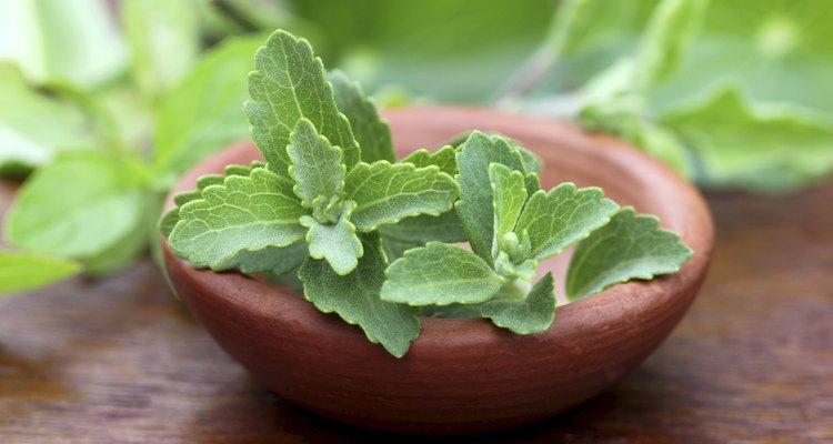 El cilantro puede cultivarse en cualquier región.