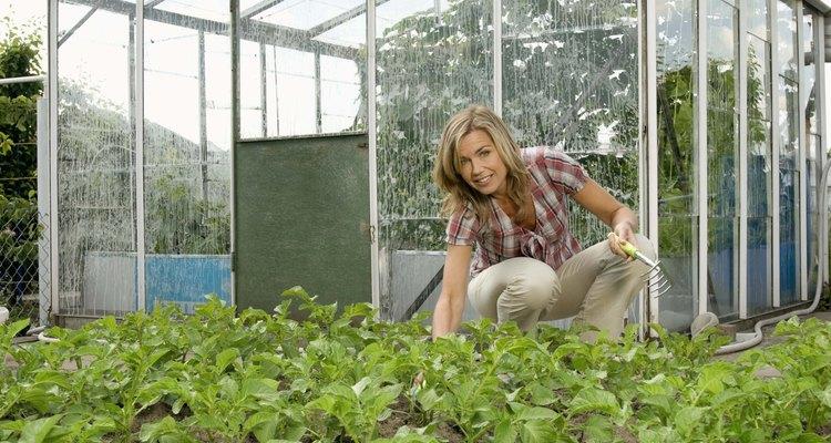 Entre más hermético tu invernadero, es probable que acumules gas etileno.