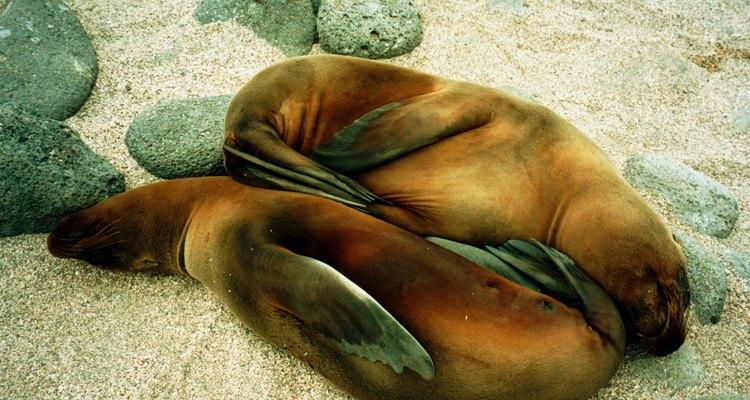 Veterinários de animais aquáticos fornecem cuidados médicos aos animais marinhos