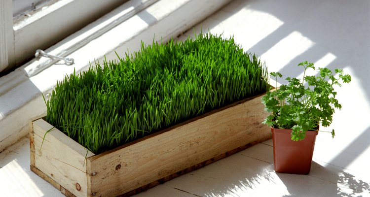Asegúrate de que tus plantas reciban suficiente luz natural.