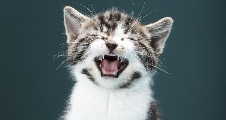 Um filhote de gato recém-nascido precisa se manter aquecido para sobreviver